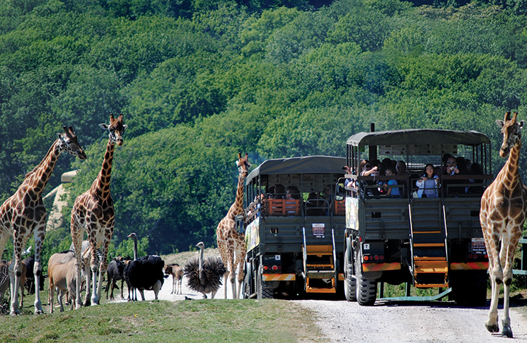 African-Experience-Port-Lympne-Reserve