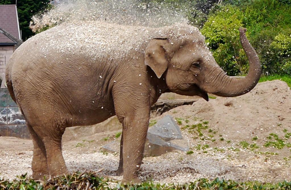 Belfast-Zoo
