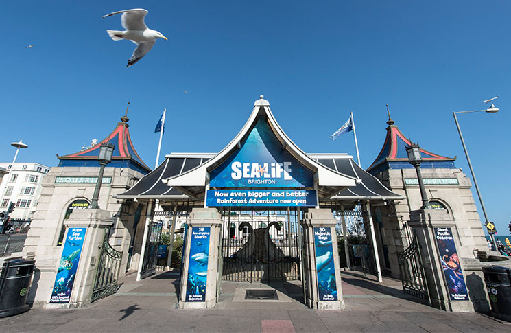 Sea-Life_1