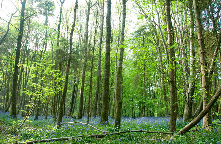 Stanmer-Woods_1