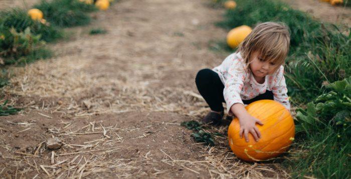 best-pumpkin-patch-uk